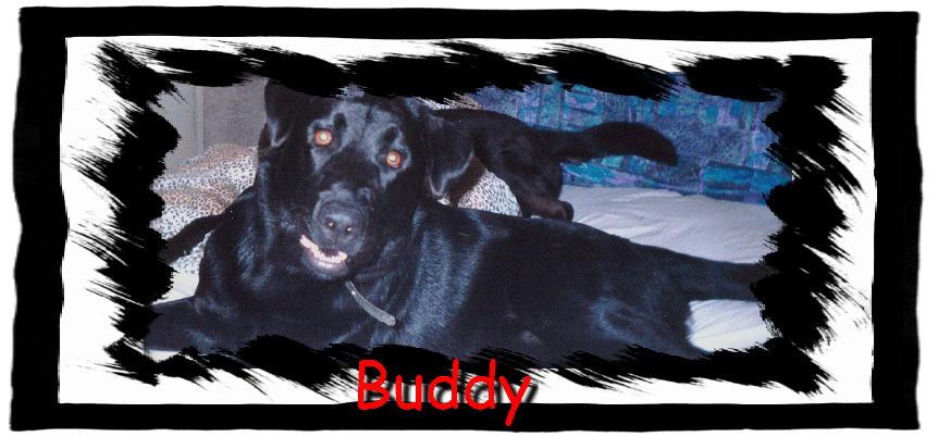 buddy01.jpg